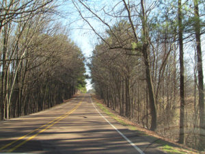 rivermossreiki-road-trees