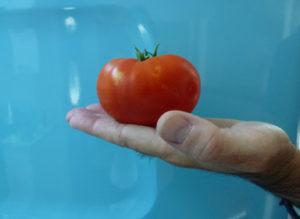 tomato-hand
