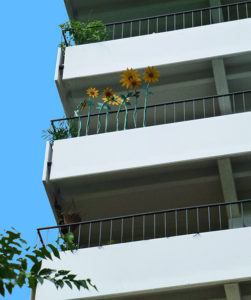 rivermossreiki-balcony-sunflowers