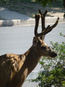 rivermossreiki-deer