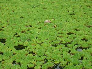rivermossreiki-lilies-coconut